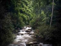 הנחל זורם בלב היער