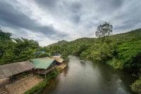 יערות הגשם של מרכז תאילנד