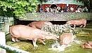 Dusit Zoo 131x76